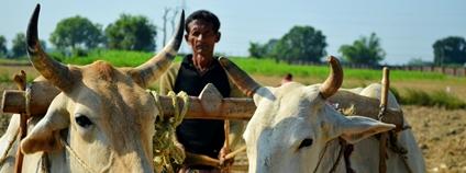 Zemědělec v Indii Foto: Varun Verma Unsplash