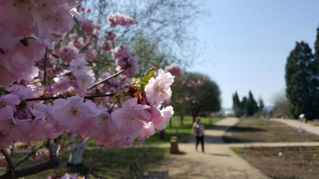 Pražskou zoo a botanickou zahradu navštívily od pondělí tisíce návštěvníků