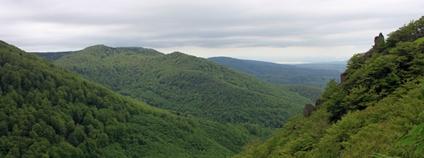 Jizerskohorské bučiny se staly první přírodní památkou ČR na seznamu UNESCO Foto: Jiří Hušek