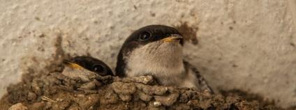 foto: Ludmila Korešová birdlife.cz