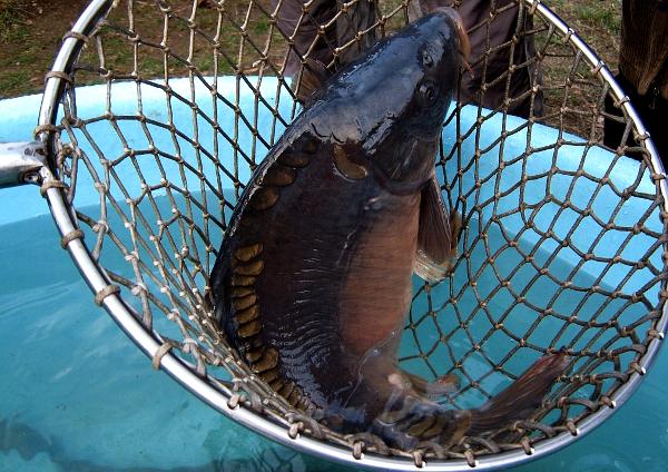 Rybáři můžou na ryby přes zákaz vycházení i v noci