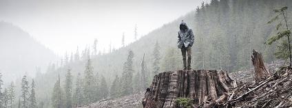 Jeden svět 2012 - foto z filmu Když se kácí les Zdroj: Jeden svět