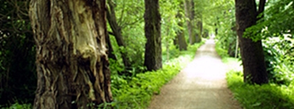 Alej Kilometrovka v Plzni Foto: Eva Haunerová Wikimedia Commons