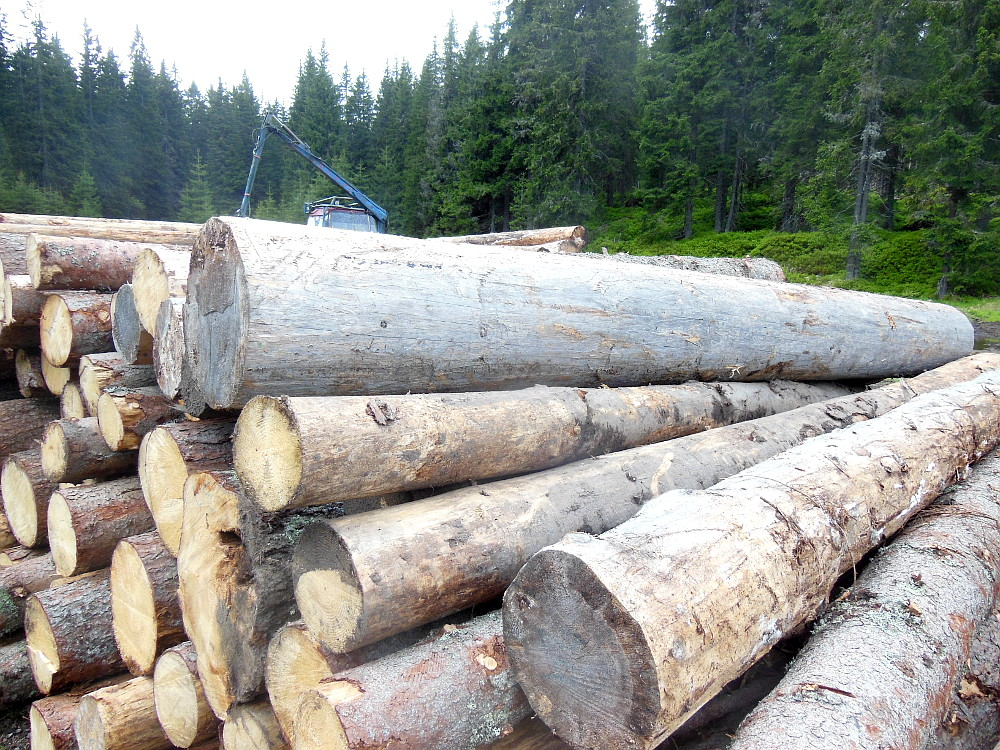 Odvážení starého dřeva na Šumavě