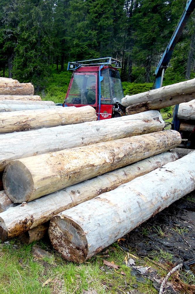 Na šumavě se těží i klády určené k zetlení tvrdí hnutí