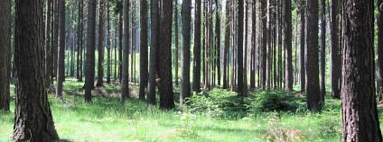 les Foto: Zdeňka Vítková / Ekolist.cz