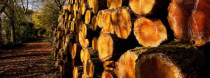 Kmeny pokácených stromů. Foto: lovestruck/Flickr.com