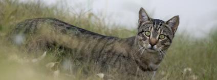 Kočka Foto: John Carnemolla / Shutterstock