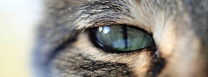 kočka Foto: SETShots Flickr