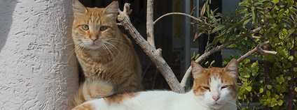 Kočky na Kypru Foto: Oleg Kr Flickr