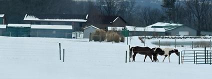 Koně v zimě Foto: ☼☼Jo Zimny Photos☼☼ Flickr