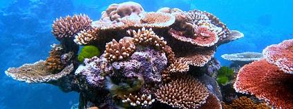 Oceány by měly být chráněny daleko víc než dosud. Na snímku Velký bariérový útes. Foto: Toby Hudson/Wikimedia Commons