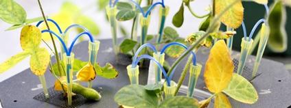 Snímky z laboratoře rostlinné biofyziky a biochemie Foto: archiv Biologického centra AV ČR