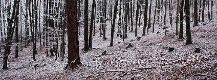 Les v zimě Foto: Faragas Wikimedia Commons