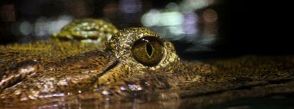 Krokodýlí oko Foto: Serena Epstein / Flickr.com