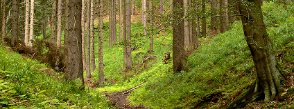 Les v Krušných horách Foto: abejorro34 Flickr