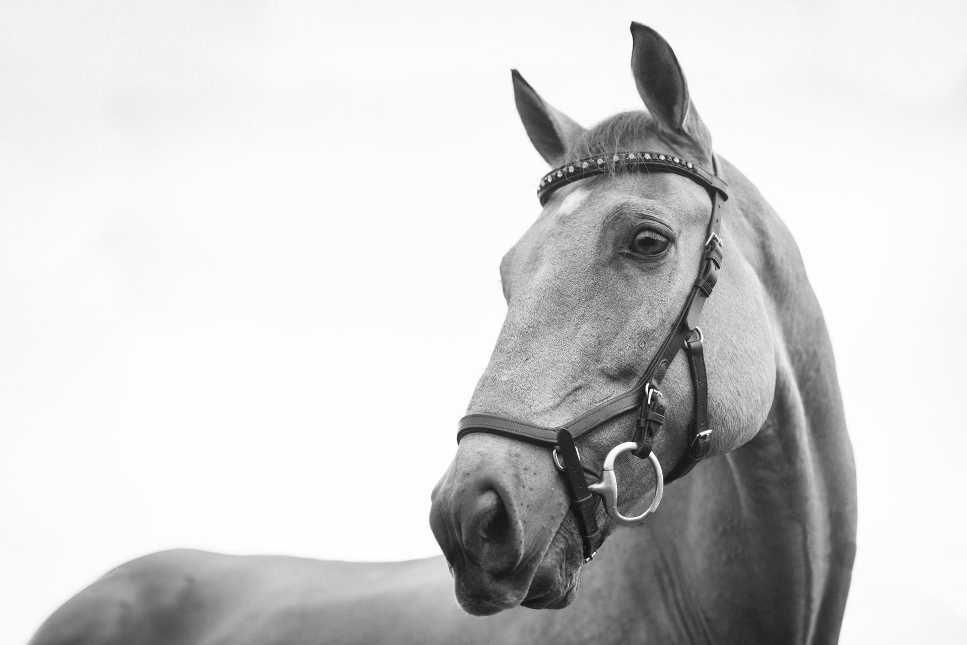 Na jihu Moravy připomínají historickou jízdou osud koní ve válce