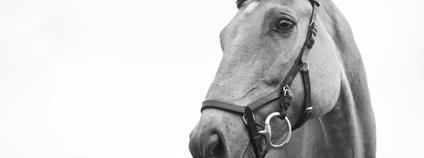 Kůň Foto: Kirsten LaChance Unsplash