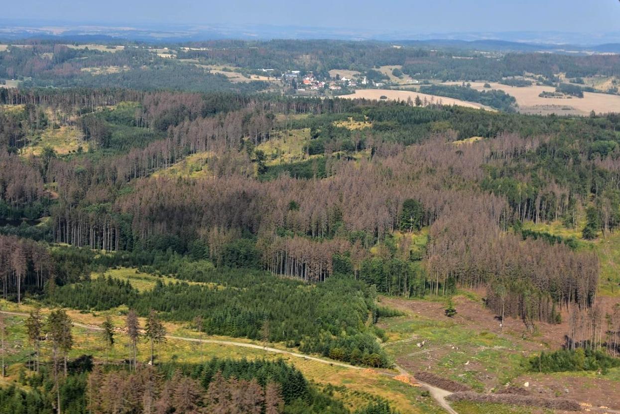 K rychlejšímu a snazšímu boji s kůrovcovou kalamitou má pomoci novela lesního zákona, která mimo jiné zavede pravidla pro státní příspěvky soukromým vlastníkům na obnovu lesů. / Ilustrační foto