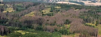 Foto:  Výzkumný ústav lesního hospodářství a myslivosti