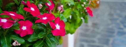 Květiny ve městě Foto: gow27 Shutterstock