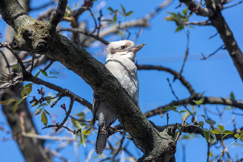 Nový koníček Australanů, pozorování ptáků, pomáhá po požárech