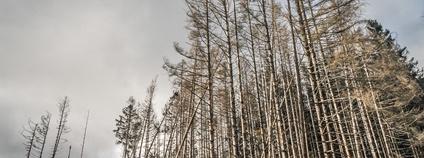 Mrtvý les v Německu Foto: Peter Vossen Flickr