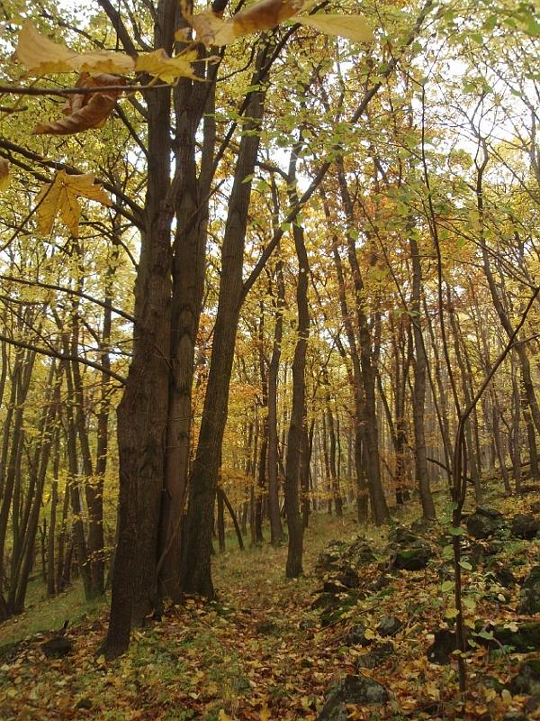 Lesní zákon sběr dřeva