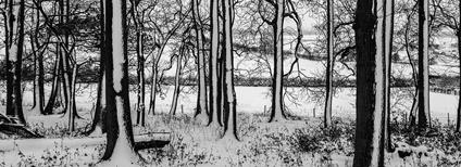 Stromy v zimě Foto: Fred Friggens Flickr