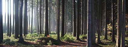 Foto: Kačka a Ondra / Flickr