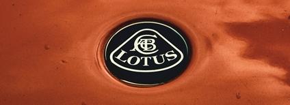 Lotus Foto: Philippe Oursel Unsplash
