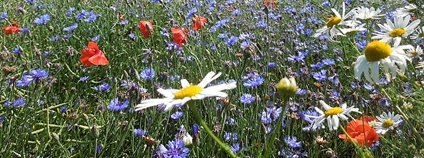 Květnatá louka Foto: ☮ Flickr