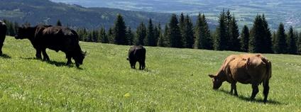 Pastva v Krkonoších Foto: KRNAP