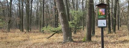 Národní přírodní památka Hodonínská Dúbrava leží mezi Hodonínem, Mutěnicemi a Dubňany, má rozlohu asi 680 hektarů. Národní přírodní památkou byla vyhlášena v roce 2014, a to především kvůli lesním porostům, které jsou tvořené společenstvy panonských teplomilných doubrav na písku, panonských dubohabřin a údolních jasanovo-olšových luhů.