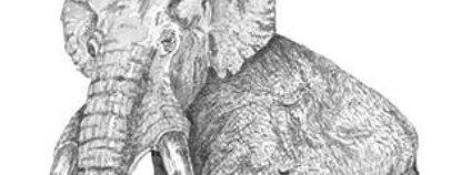 Mamut jižní Foto: Burzagli Wikimedia Commons