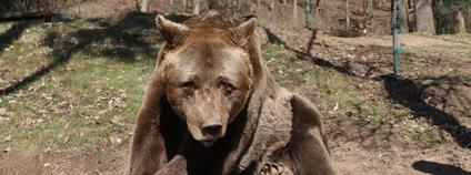 Medvěd Pišta v plzeňské zoo Foto: FB Zoo Plzeň