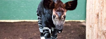Foto: Londýnská zoo