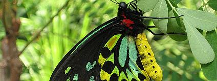 Ilustrační obrázek pavilonu motýlů v melbournské zoo:  Ellie Gee / Flickr