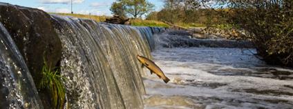 Foto: Petteri Hautamaa / WWF Finland