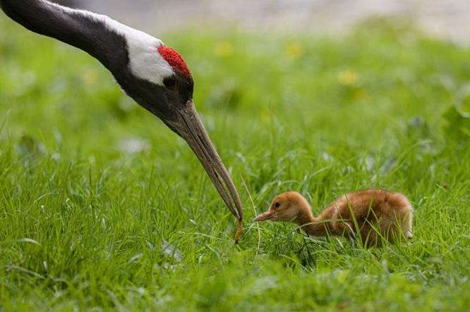 V pražské zoo se letos narodilo 272 mláďat, nejmladší mají několik dnů