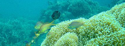 Korálový útes Foto: ngkhai.net/ Wikimedia Commons