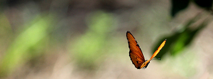 Motýl Foto: gabontour / Flickr.com