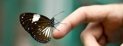 motýl Foto: Eve Flickr