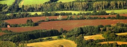 Aby usnadnila živočichům migraci, měla by mozaiková heterogenní krajina obsahovat liniové nebo bodové struktury typu alejí, stromořadí, vegetačních pruhů, remízků a mezí. <br />