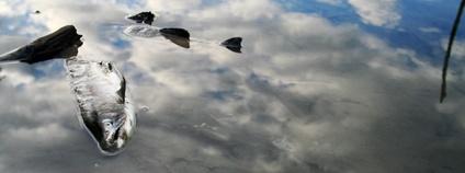 Mrtvá ryba Foto: Jolene Faber Flickr.com