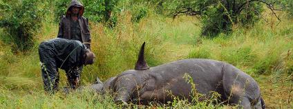 Mrtvý nosorožec Foto: Arno Meintjes Wildlife / Flickr