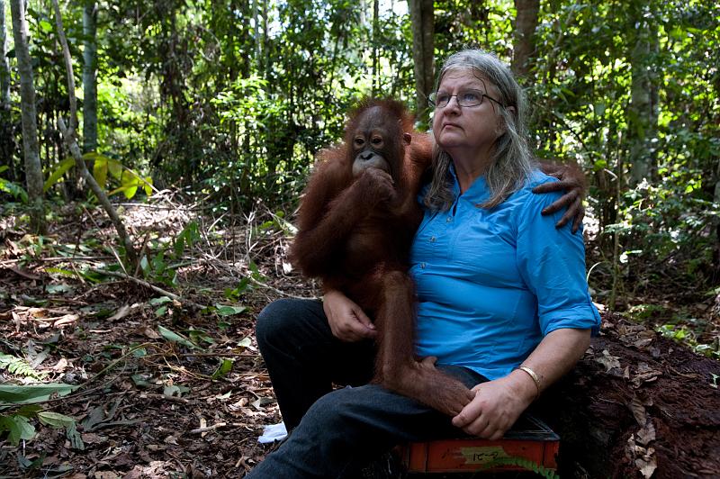 Biruté Mary Galdikasová věnovala orangutanům celý život. Snímek z filmu Návrat do divočiny 3D.