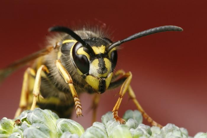 Nebezpečný hmyz – znáte naše jedovaté brouky