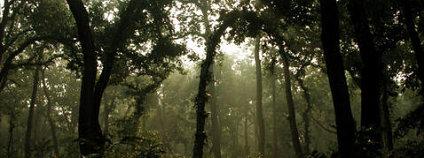 Boj o záchranu rostlinných a živočišných druhů se zpravidla vede v místech na rozhraní přírody a hustého lidského osídlení. Foto: Leofleck / Wikimedia Commons