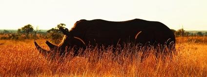 Nosorožec v JAR Foto: Javier Ábalos Flickr